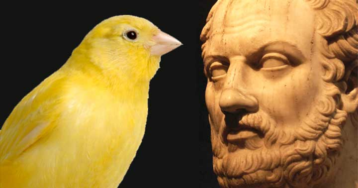Thucydides: The Historian and the Bird